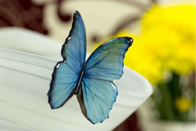 Blue morpho big brooch