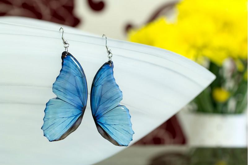 Blue morpho butterfly wing earrings