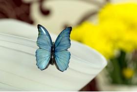 Blue morpho small brooch