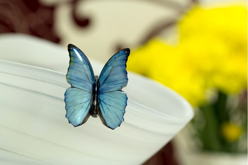 Blue morpho small brooch