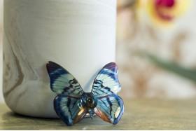 Divalis butterfly brooch